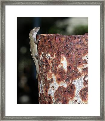 Framed Print featuring the photograph Lizzy by Richard Rizzo