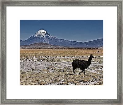 Llama And Sajama Framed Print