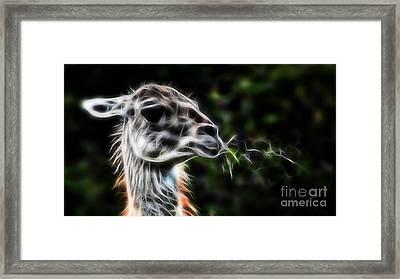 Llama Framed Print by Marvin Blaine