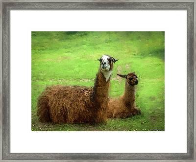 Llamas Framed Print by Ken Morris