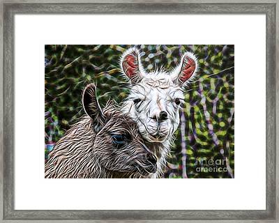 Llamas Framed Print by Marvin Blaine