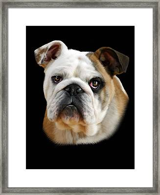 Llewellyn Framed Print by Julie L Hoddinott