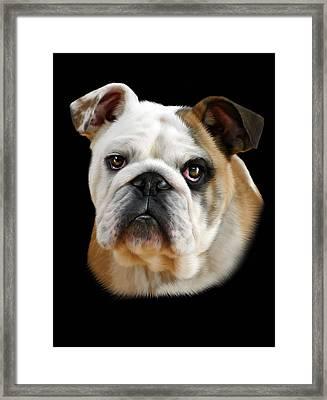 Llewellyn Framed Print by Julie L Hoddinott