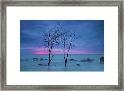 Lm Trees Framed Print