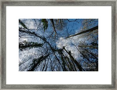 Loamhole Dingle Treetops Framed Print by Rawshutterbug
