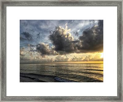 Loan Pelican Framed Print