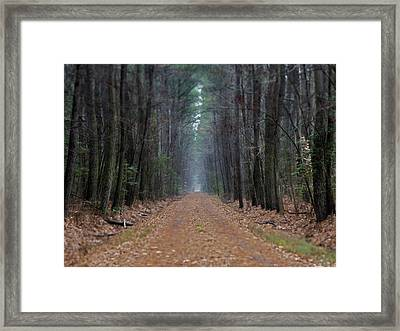 Framed Print featuring the photograph Loblolly Lane by Robert Geary