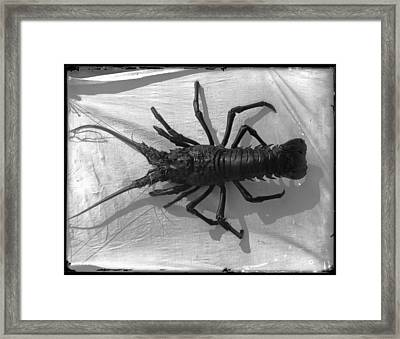 Lobster Black And White Photograph Framed Print by PhotographyAssociates