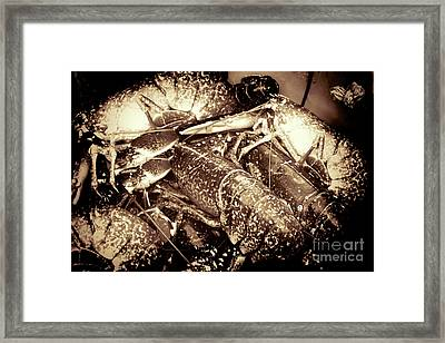Lobster Catcher Framed Print by Baggieoldboy