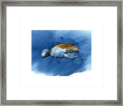 Lobster Claw Framed Print by Paul Gaj