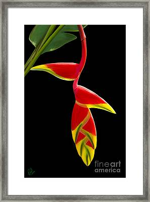 Lobster Claw Framed Print