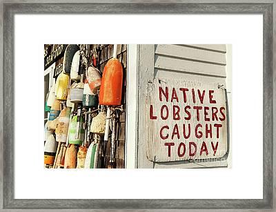 Lobster Shack. Framed Print by John Greim