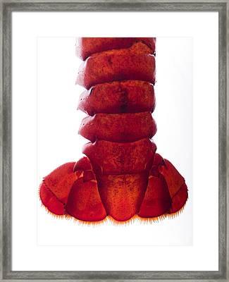 Lobster Tail Framed Print