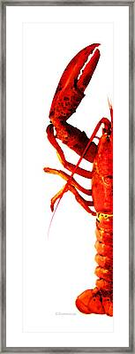 Lobster - The Left Side Framed Print