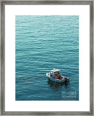 Lobsterman In Maine Framed Print by Diane Diederich