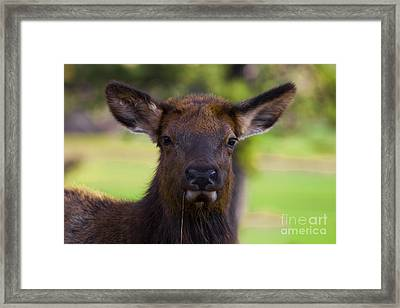 Local Girls Framed Print by Barbara Schultheis