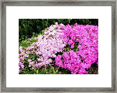 Local Greenery 2 Framed Print by Michael C Crane