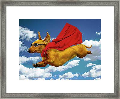 Local Hero Framed Print by Sandra Selle Rodriguez