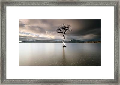 Loch Lomond Lone Tree Framed Print