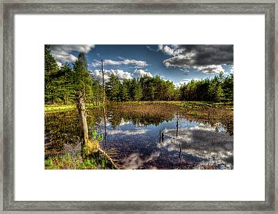 Lochan Close To Loch Garten Framed Print by Gabor Pozsgai