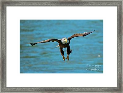 Locked On Framed Print by Mike Dawson