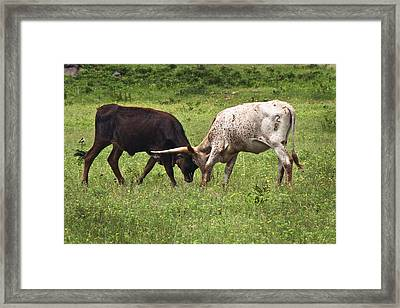 Framed Print featuring the photograph Locking Horns by Tamyra Ayles