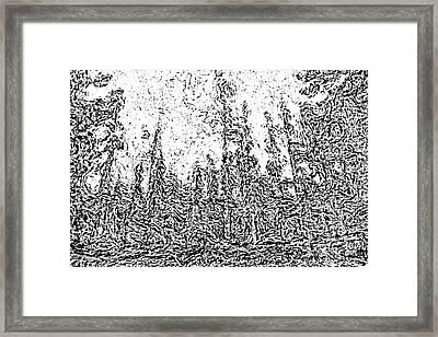 Lodgepole Pine Sketch Framed Print