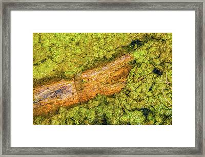 Log In Algae Framed Print