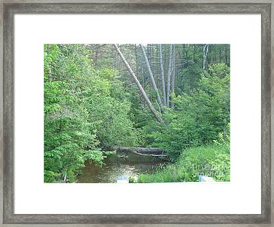 Log In The Woods Framed Print by Melissa Miller