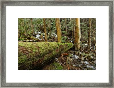 Log Over A Stream Framed Print by Jeff Swan