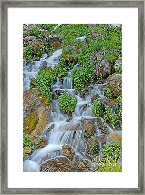 Logan Canyon Cascade Framed Print by Dennis Hammer