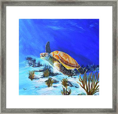 Loggerhead Sea Turtle Framed Print by John Moon