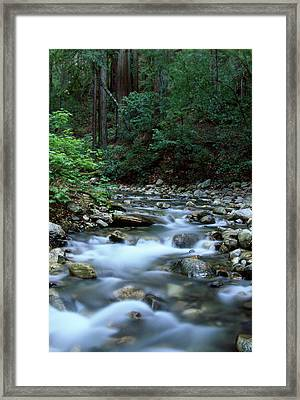 Logwood Creek - Ventana Wilderness Framed Print by Soli Deo Gloria Wilderness And Wildlife Photography