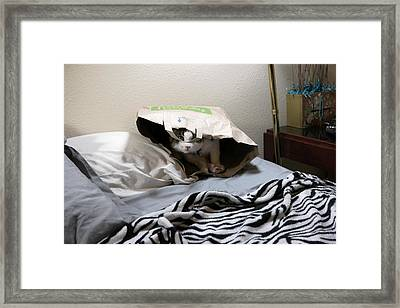 Lois's Favorite Cat Picture In The Whole Wide World Framed Print