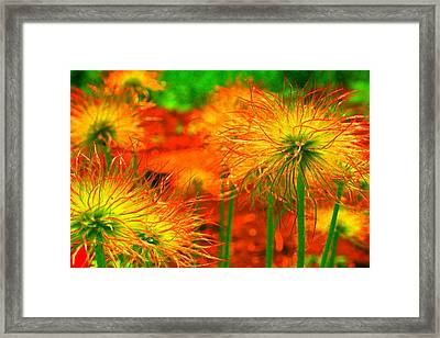 Lollipops Framed Print by Julie Lueders