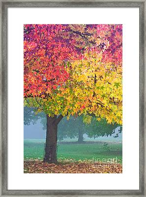 London Autumn Framed Print by David Bleeker