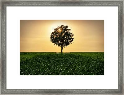 Lone Backlit Tree Framed Print by Todd Klassy