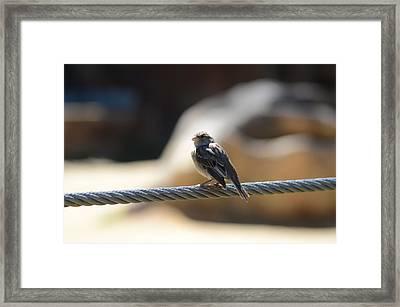 The Sentry Framed Print