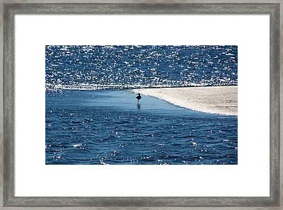 Lone Bird On The Shore Framed Print by Rosanne Jordan