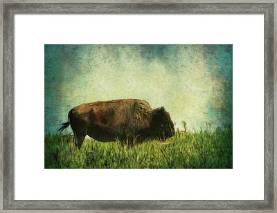 Lone Bison On The Prairie Framed Print by Ann Powell