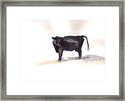 Lone Black Angus Framed Print by Sharon Mick