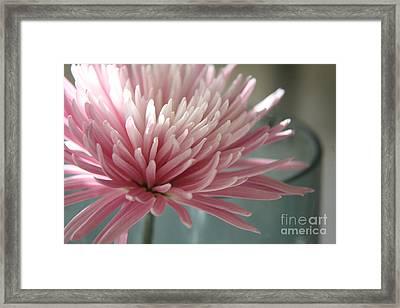 Lone Bloom Framed Print