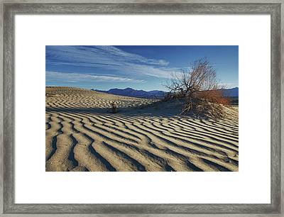 Lone Bush Death Valley Hdr Framed Print by James Hammond
