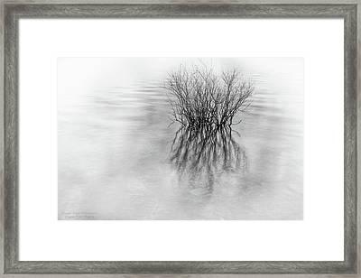Lone Bush Framed Print