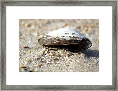 Lone Clam Framed Print by Mary Haber