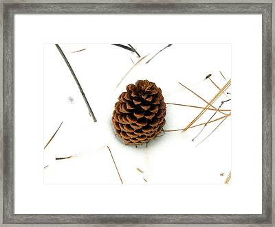 Lone Cone Framed Print by Will Borden