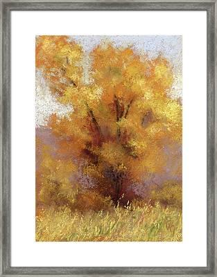 Lone Cottonwood Framed Print