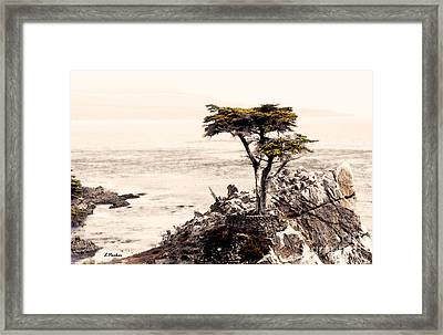 Lone Cypress At Sunset Framed Print by Linda  Parker