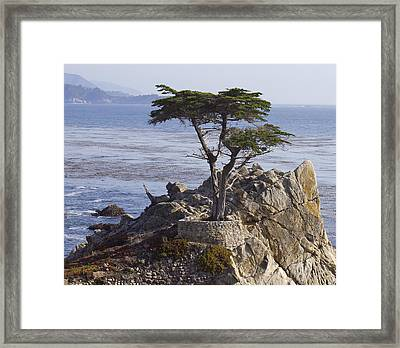 Lone Cypress Framed Print by Elvira Butler