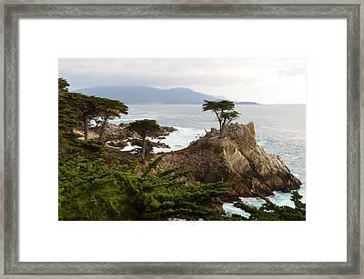 Lone Cypress Large Framed Print